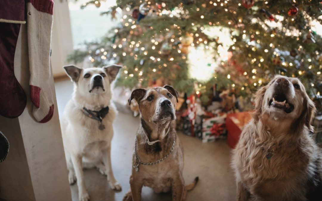 3 Gifts Your Pet Wants Under the Christmas Tree